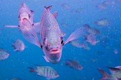 Inquiring Fish