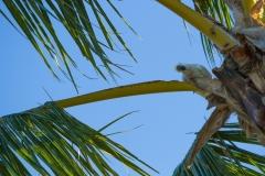 Cockatoo Stares
