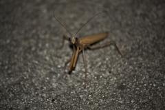 Late Night Praying Mantis