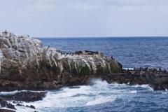 Point Lobos Sea Lions