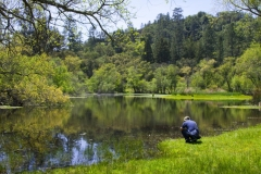 Pogonip Lake